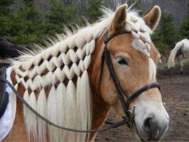 Pics Of Hair Styles: Horse Hair Style