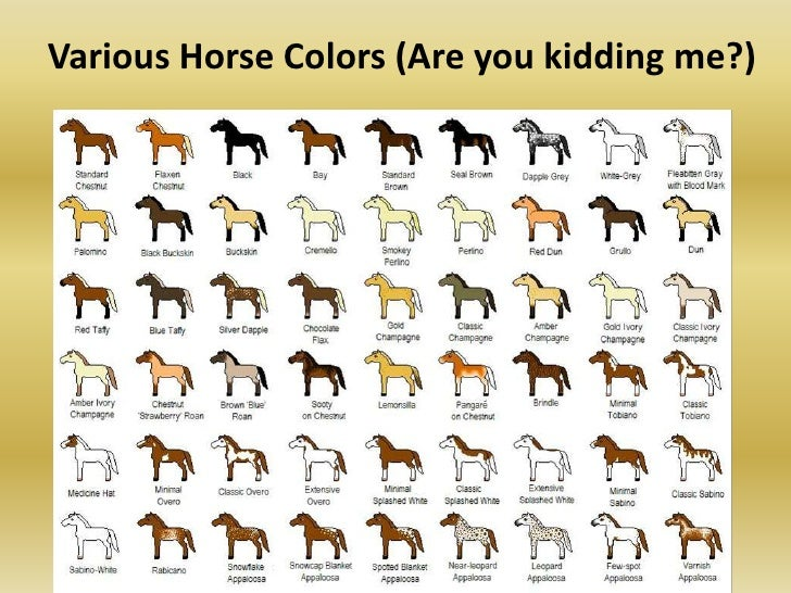 Horse Markings And Colors
