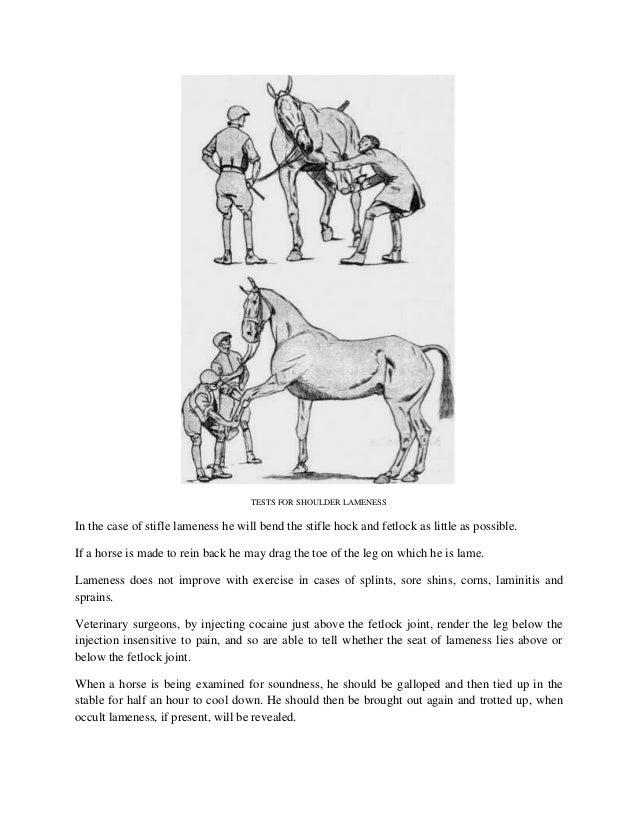 Gemütlich Stifle Horse Anatomy Zeitgenössisch - Menschliche Anatomie ...