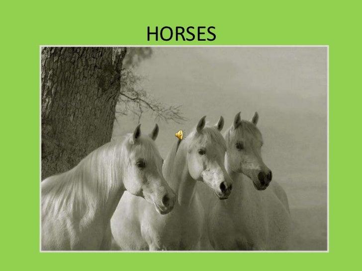 HORSES<br />