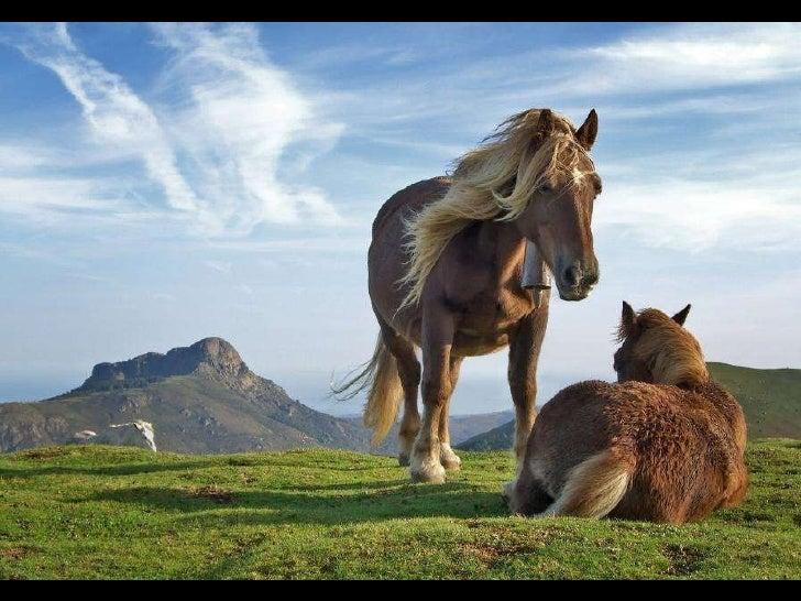 Horses Slide 2
