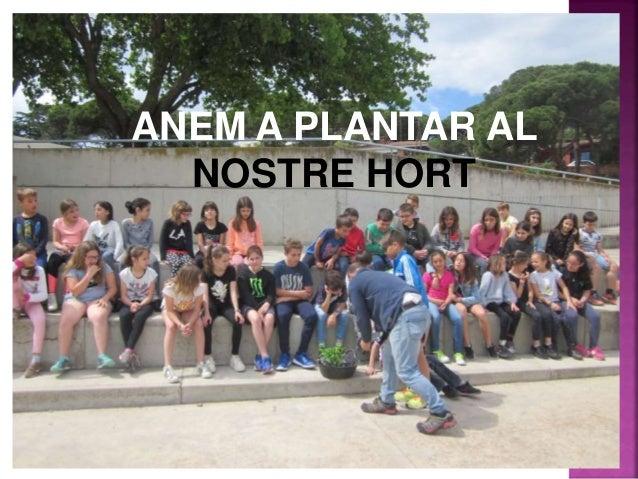 ANEM A PLANTAR AL NOSTRE HORT