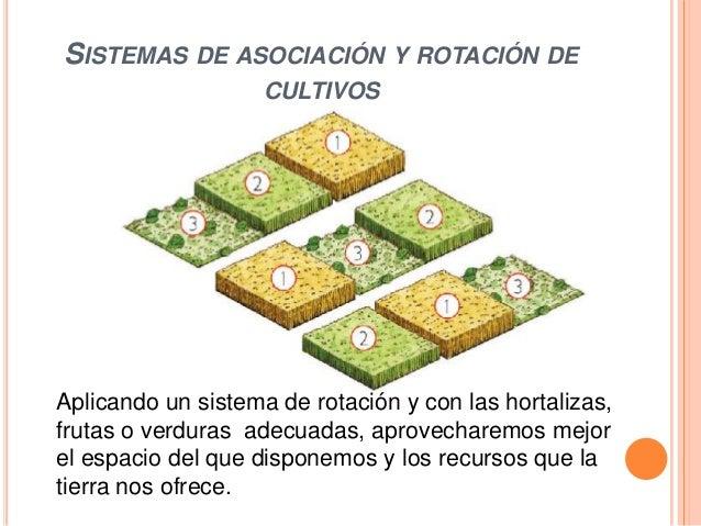Hortalizas for Asociacion de hortalizas