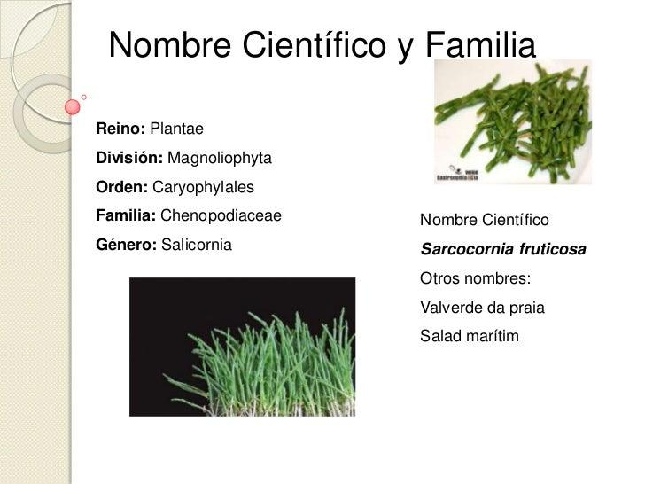 Hortalizas verduras for Plantas hortalizas ejemplos