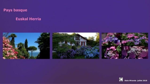 Hortensias au pays basque 01