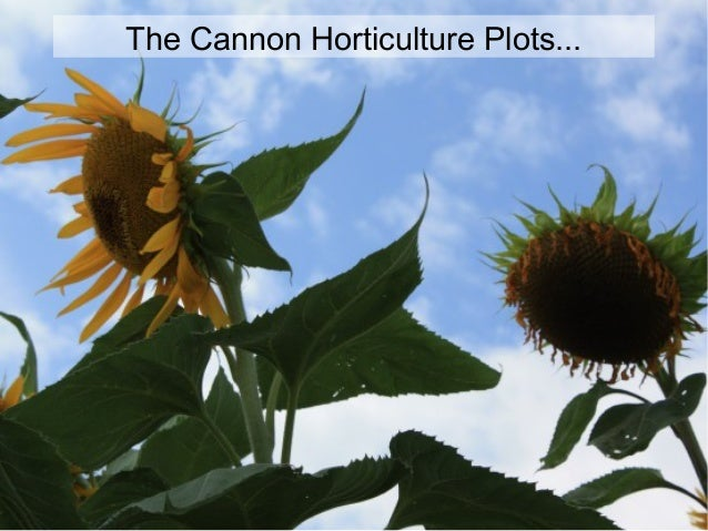 The Cannon Horticulture Plots...