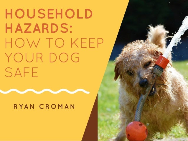 HOUSEHOLD HAZARDS: HOW TO KEEP YOUR DOG SAFE RYAN CROMAN