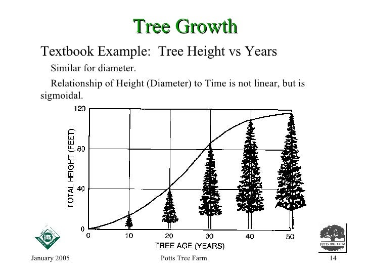 how to tell height of tree