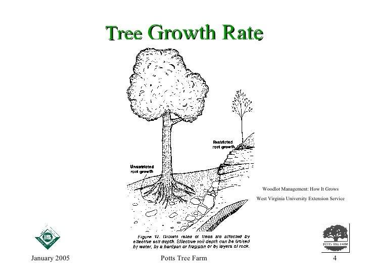 How Do Trees Grow