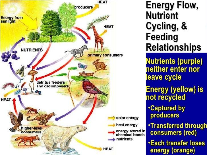 Detritus Feeders. How Ecosystems Work Apbio .