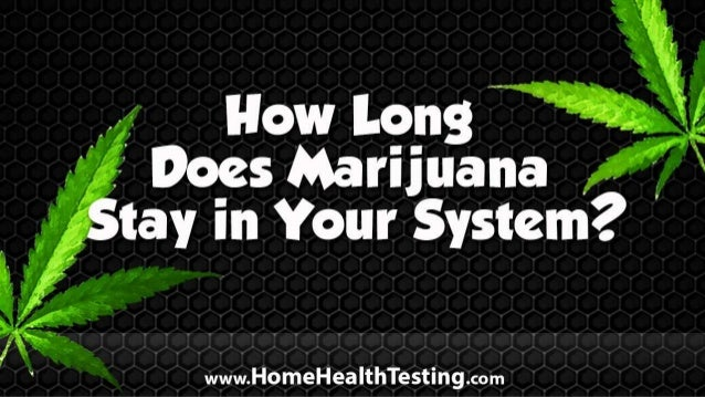 How Long Does Marijuana Stay in Your System?
