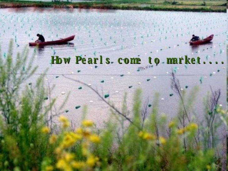 How Pearls come to market....