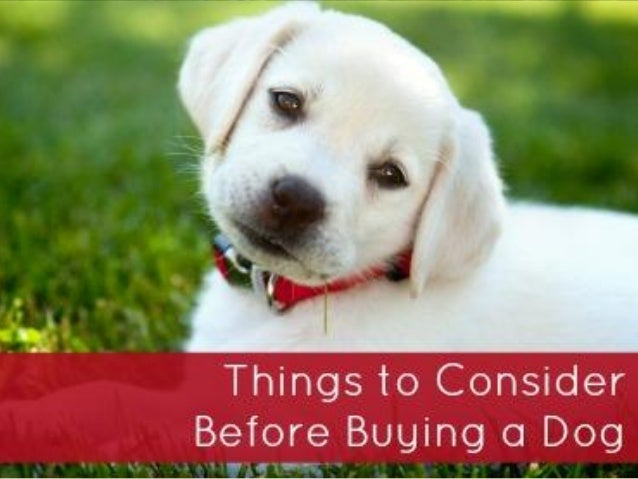 how to consider before buying a dog