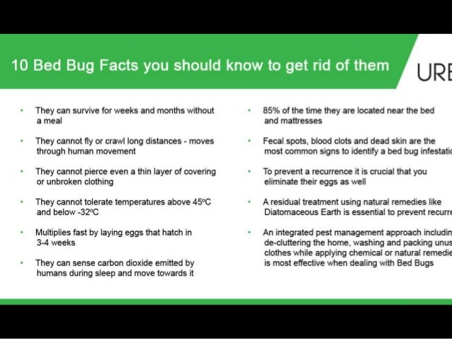 Bed Bugs Get Rid Of Them Naturally