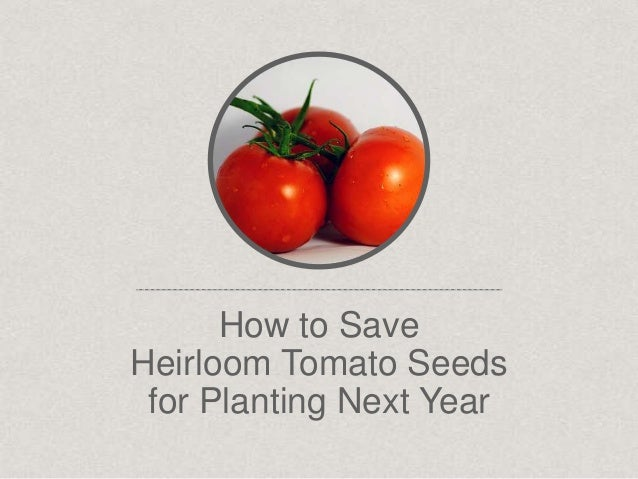 How to Save Heirloom Tomato Seeds for Planting Next Year
