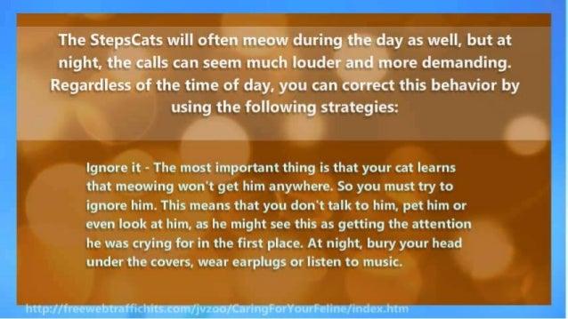 How to Stop Cat Meowing - 2 Effective Ways to Quiet Your Feline
