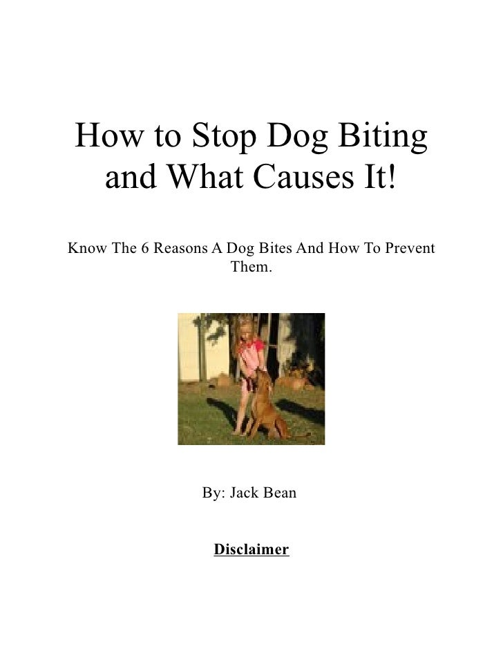 How to Stop Dog Biting and What Causes It!Know The 6 Reasons A Dog Bites And How To Prevent                     Them.     ...