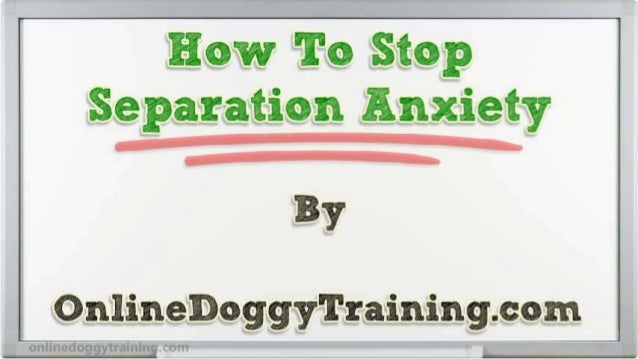 How To Stop Separation Anxiety Tips
