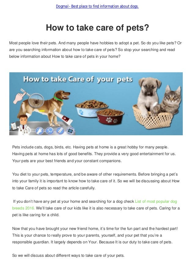 how to take care of your pet