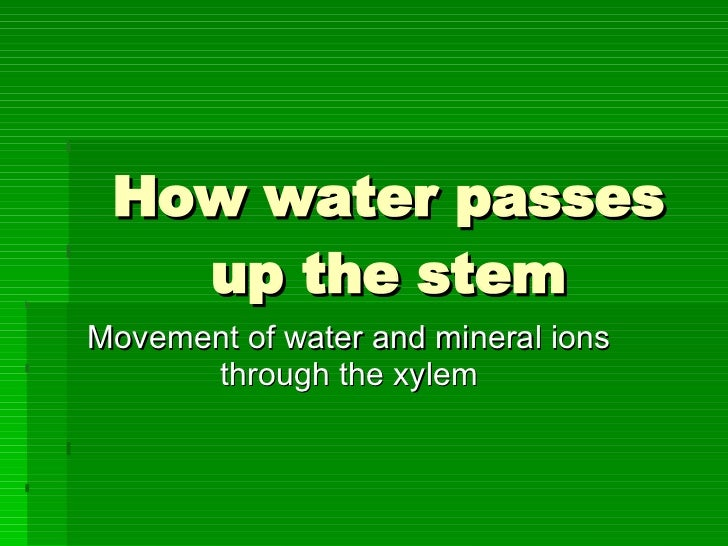 How water passes up the stem Movement of water and mineral ions through the xylem