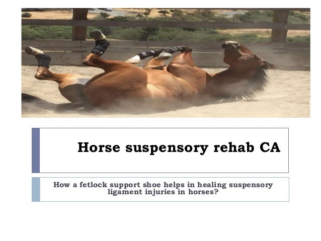 How a fetlock support shoe helps in healing suspensory ligament injur…