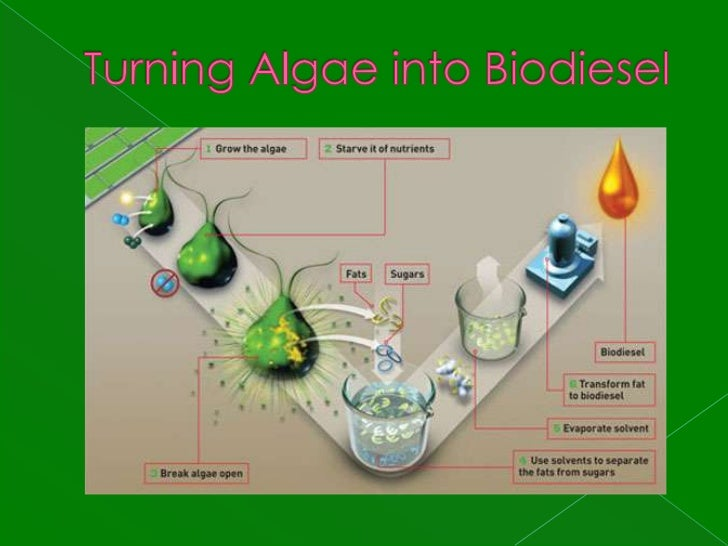 turning algae into gasoline essay Making algal biofuel production more efficient, less national recognition for developing a process to turn algae into bio-crude oil gasoline, and jet fuel.