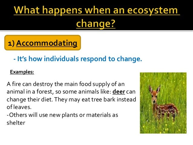 How do environmental changes affect a