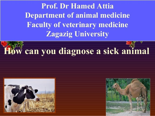 veterinary medicine important to animals and The scope of veterinary medicine is wide, covering all animal species, both   computers have become essential tools in almost every field of.