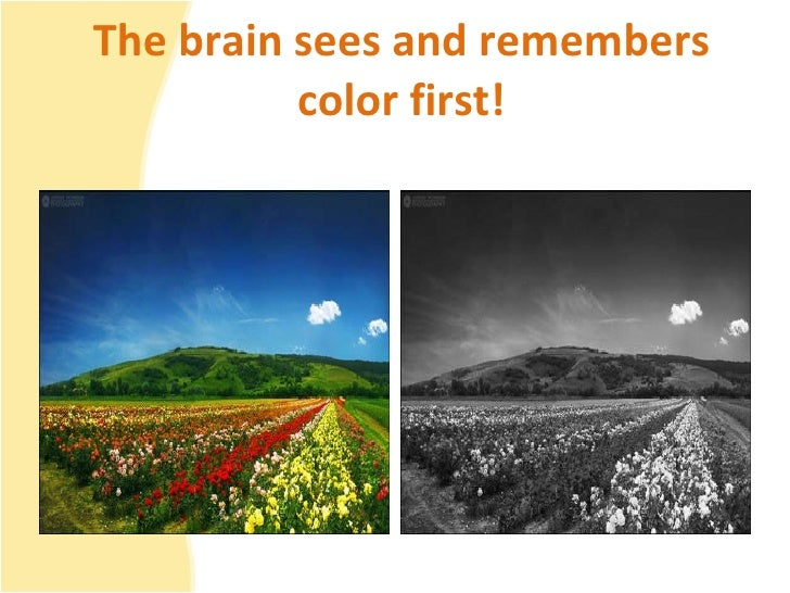 The brain sees and remembers color first!