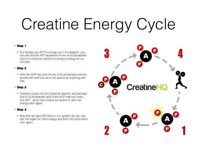 A look at the chemical element creatine and its uses