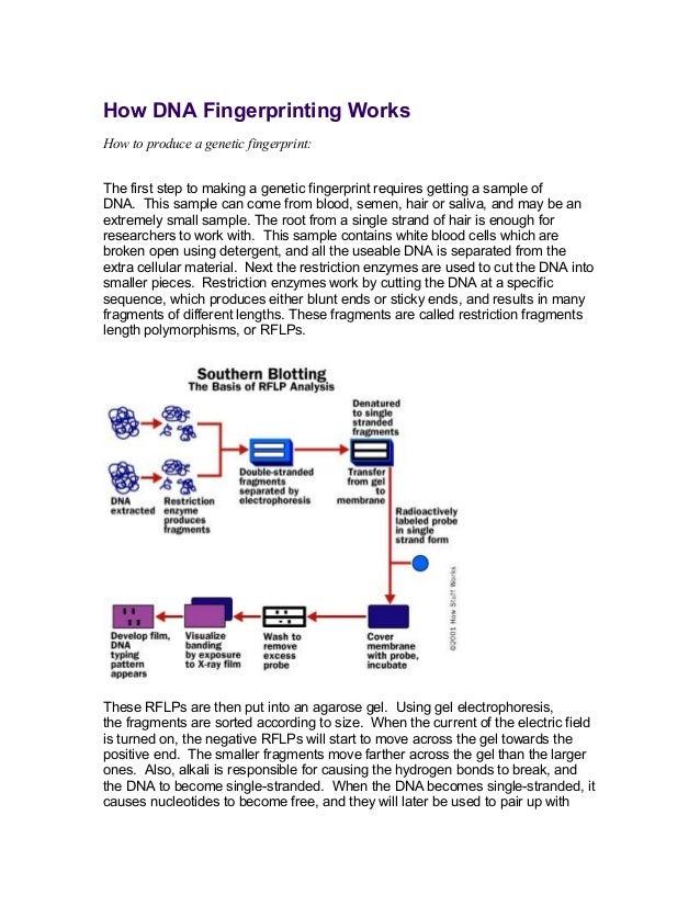 How dna fingerprinting works