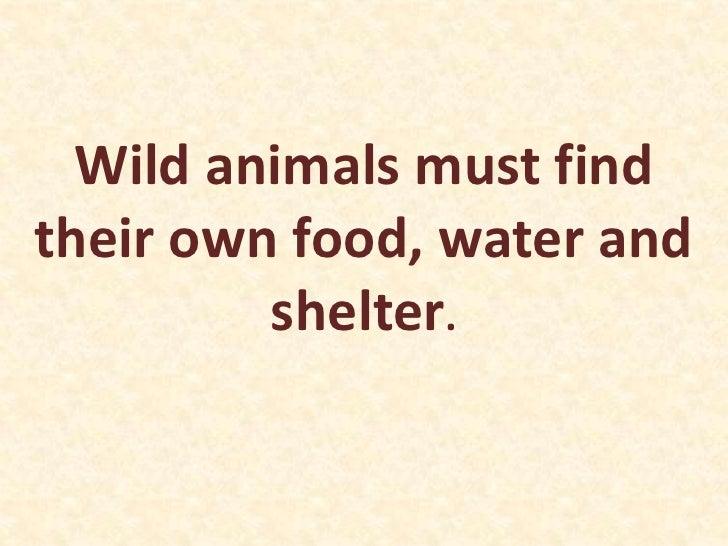 animals meet their needs