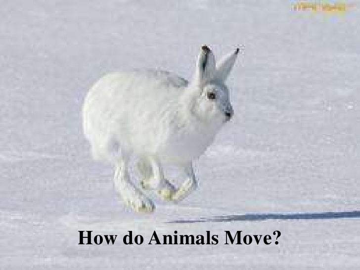 How do animals move? - 80.9KB