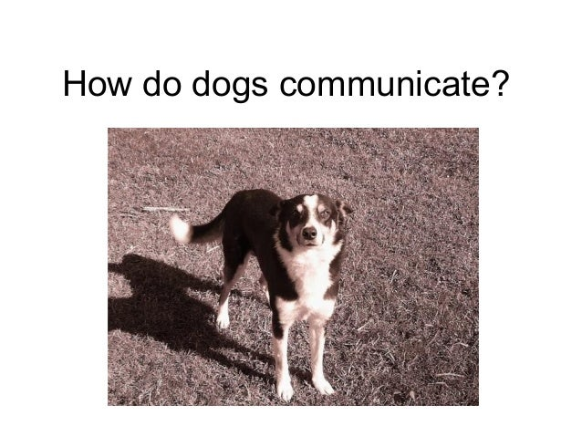 How do dogs communicate?
