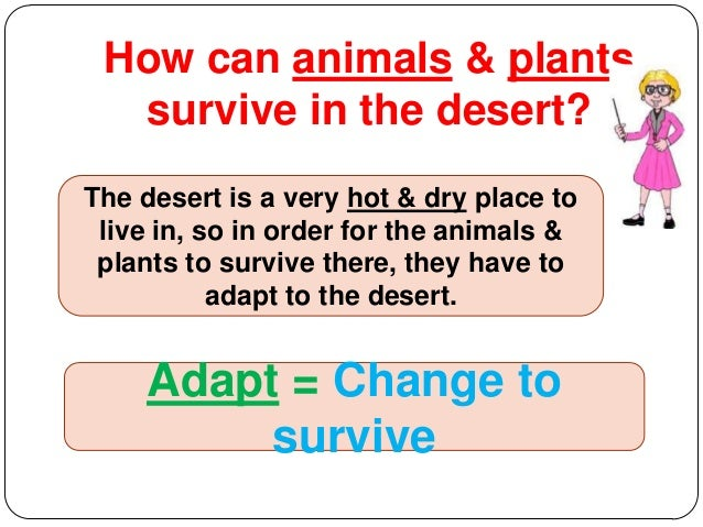 how are plants adapted to dry