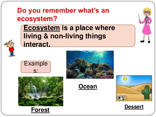 Difference between habitat and ecosystem