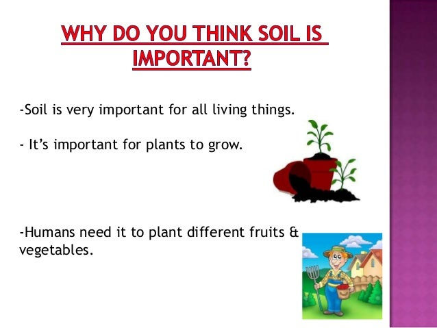 How does soil affect living things for Things in soil