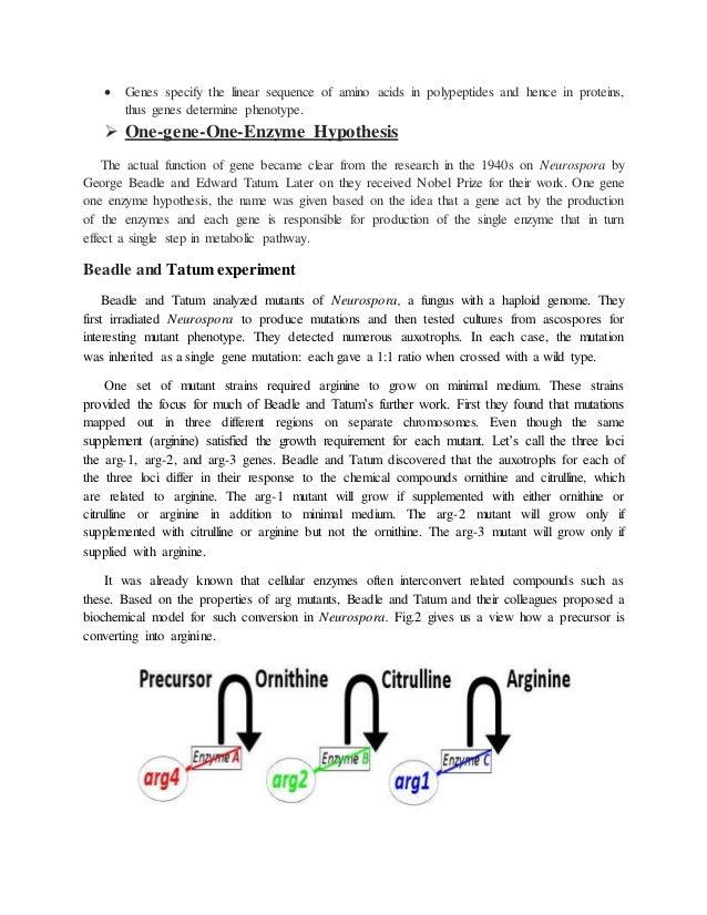 How does amino acid hookup work