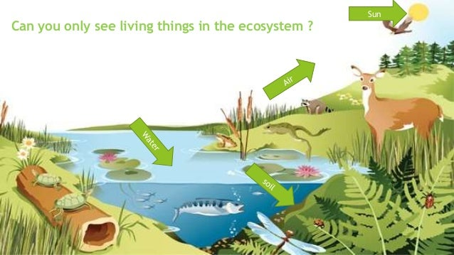 ecosystem and living organisms Issues in ecology published by the ecological society of america between living organisms and although every organism contributes to ecosystem.