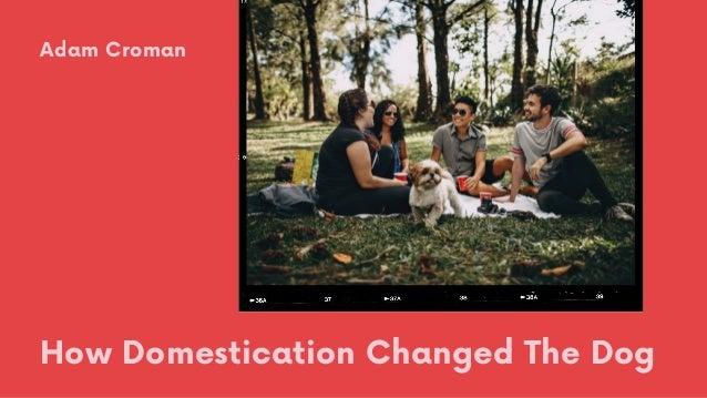 How Domestication Changed The Dog Adam Croman
