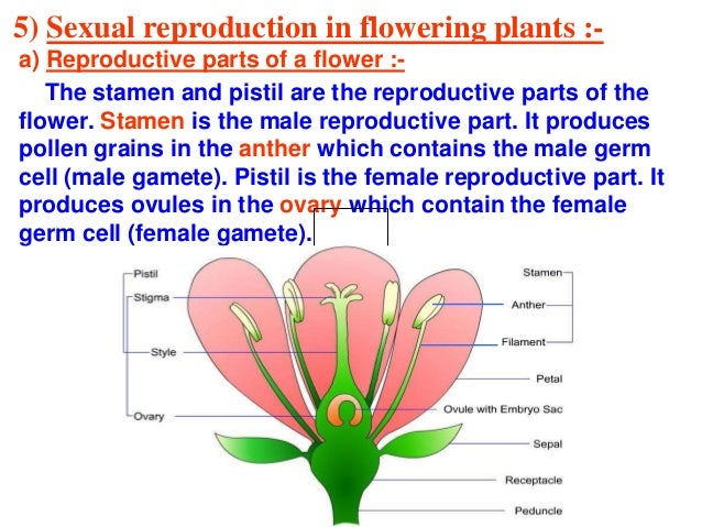 Sexual reproduction in plants pdf files