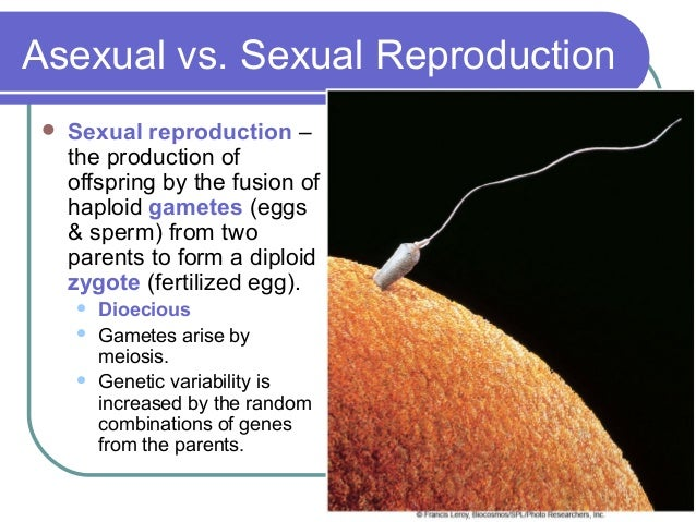 What is something that reproduces sexually