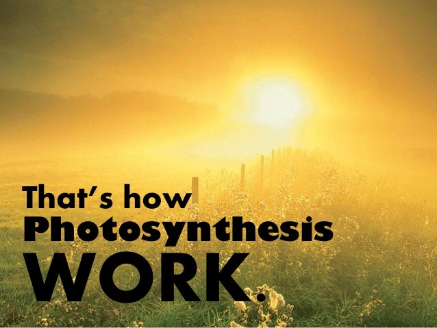 how photosynthesis works According to theoretical chemist graham fleming of the university of california at berkeley and colleagues, photosynthesis achieves its.