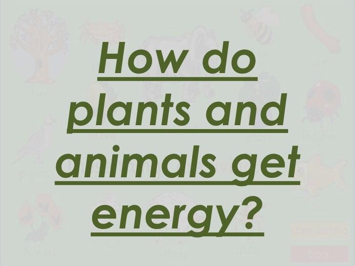 How doplants andanimals get energy?