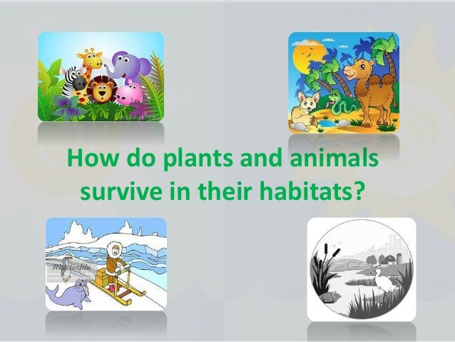 a comparison of a successful survival plants and animals Plant and animal cells contain different organelles, which are tiny structures inside the cells that perform different functions however, both plant and animal cells serve the same basic functions they divide over time so that plants and animals can change and grow.