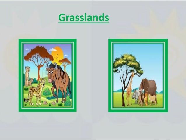 Animals of the wetlands
