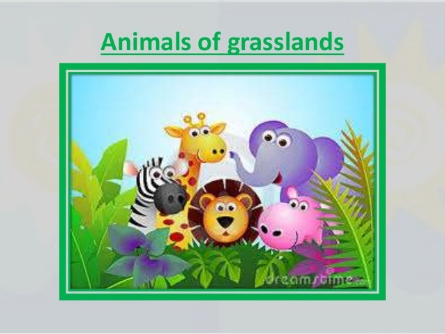 Wetlands are : • Wet and grassy