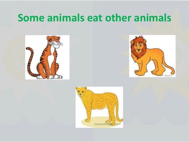 Animals of the tundra :