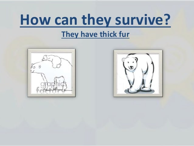 How do plants and animals survive in their habitat