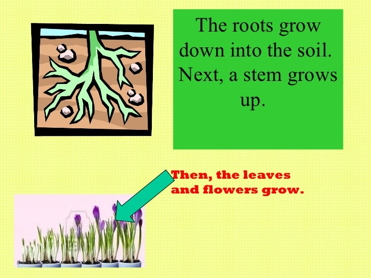 how do plants grow and change chap, Natural flower